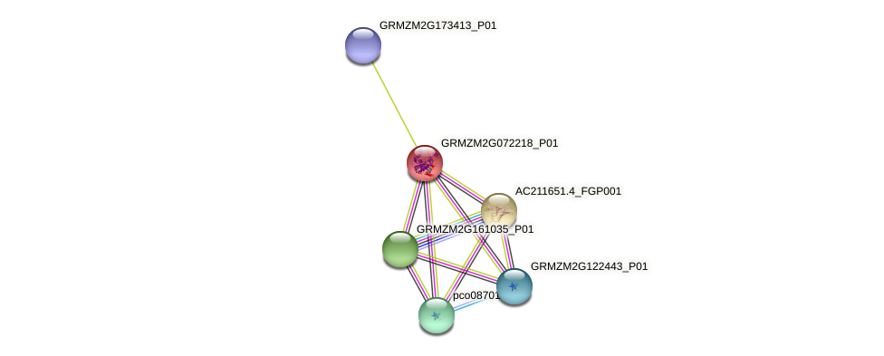 GRMZM2G072218_P01 protein (Zea mays) - STRING interaction network