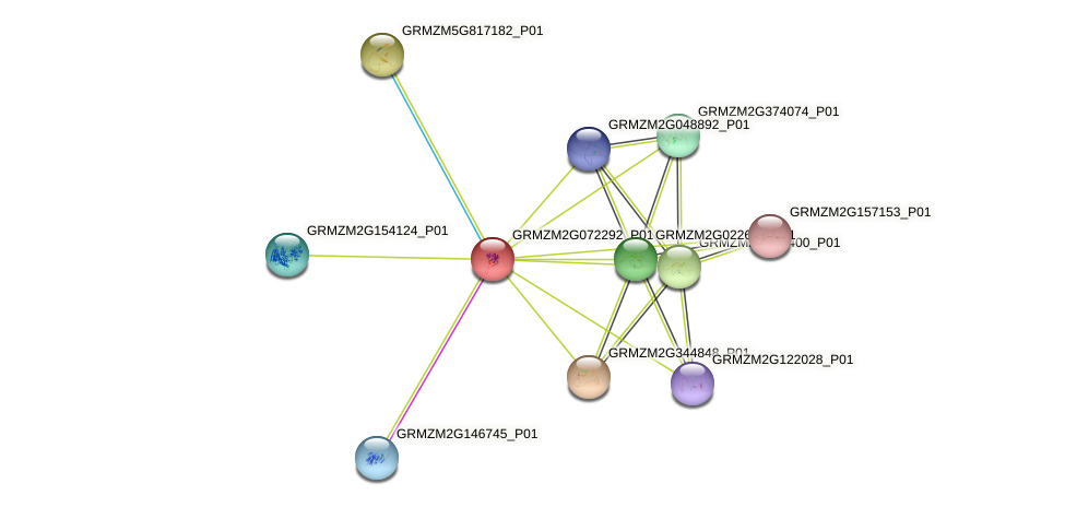 GRMZM2G072292_P01 protein (Zea mays) - STRING interaction network