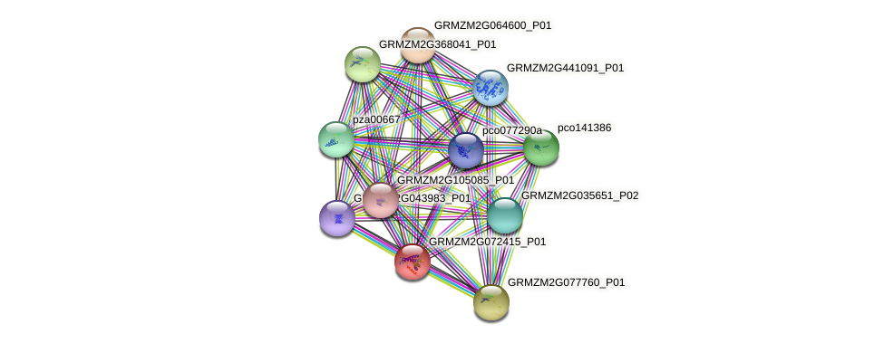 GRMZM2G072415_P01 protein (Zea mays) - STRING interaction network