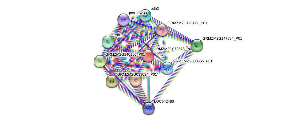 Zm.126092 protein (Zea mays) - STRING interaction network