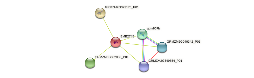 GRMZM2G072600_P01 protein (Zea mays) - STRING interaction network