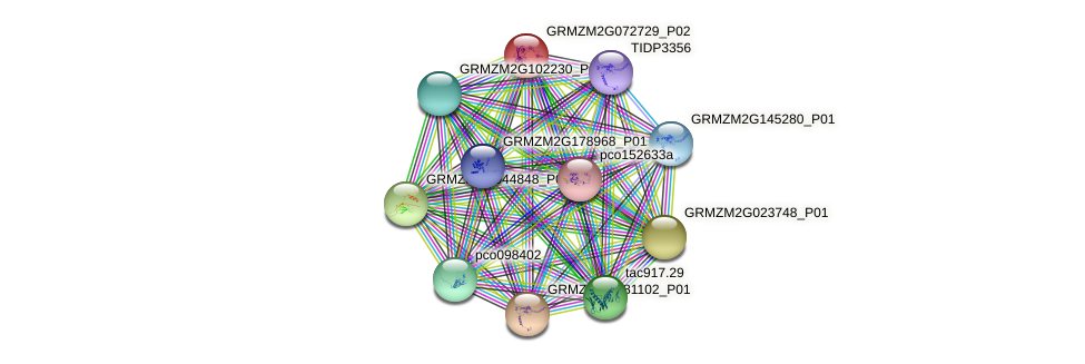 GRMZM2G072729_P01 protein (Zea mays) - STRING interaction network