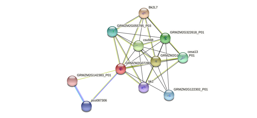 GRMZM2G072808_P01 protein (Zea mays) - STRING interaction network