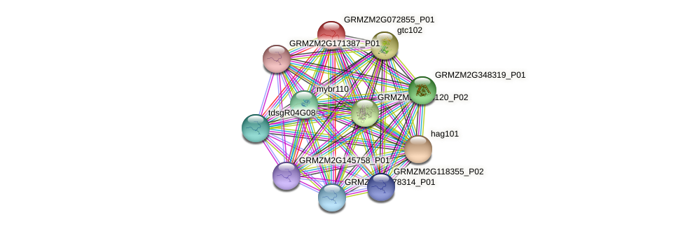 GRMZM2G072855_P01 protein (Zea mays) - STRING interaction network
