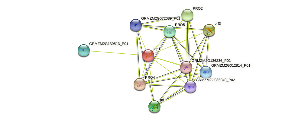 EXPB9 protein (Zea mays) - STRING interaction network