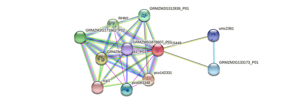 pco065449 protein (Zea mays) - STRING interaction network