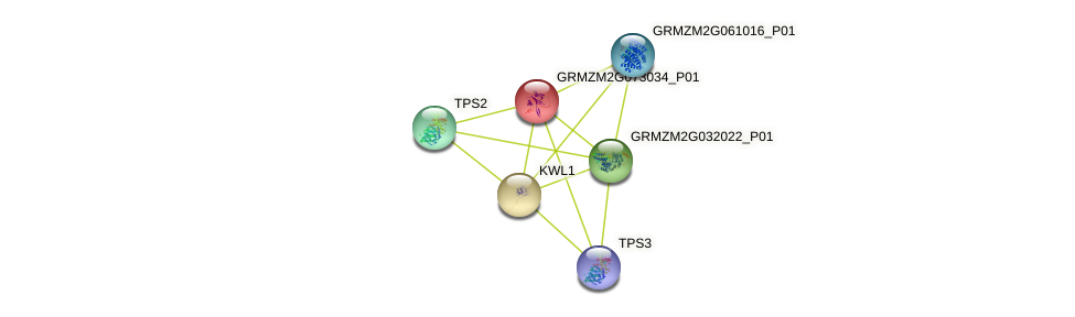 GRMZM2G073034_P01 protein (Zea mays) - STRING interaction network