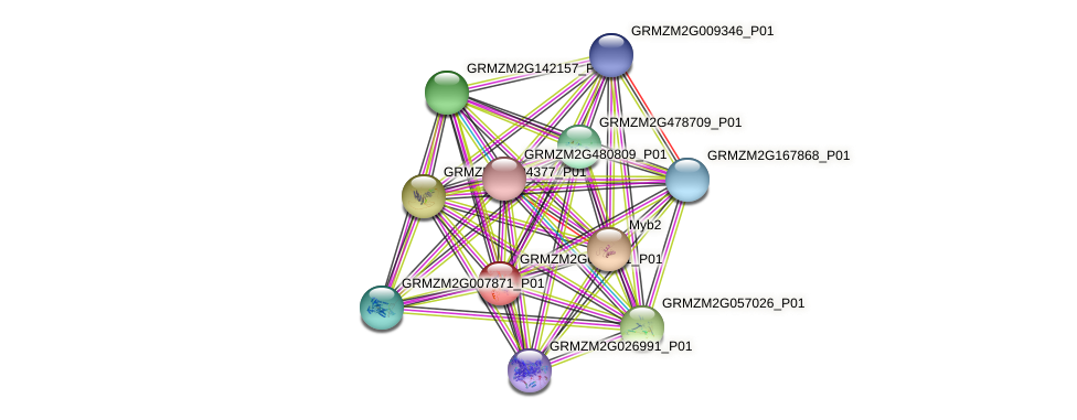 GRMZM2G073041_P01 protein (Zea mays) - STRING interaction network