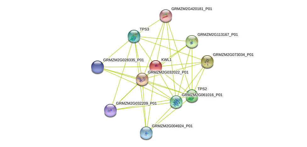 Zm.25000 protein (Zea mays) - STRING interaction network