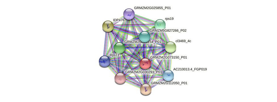 GRMZM2G073150_P01 protein (Zea mays) - STRING interaction network
