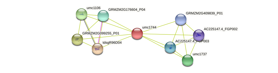 GRMZM2G073155_P01 protein (Zea mays) - STRING interaction network