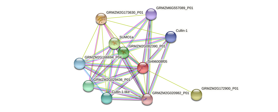 GRMZM2G073228_P01 protein (Zea mays) - STRING interaction network