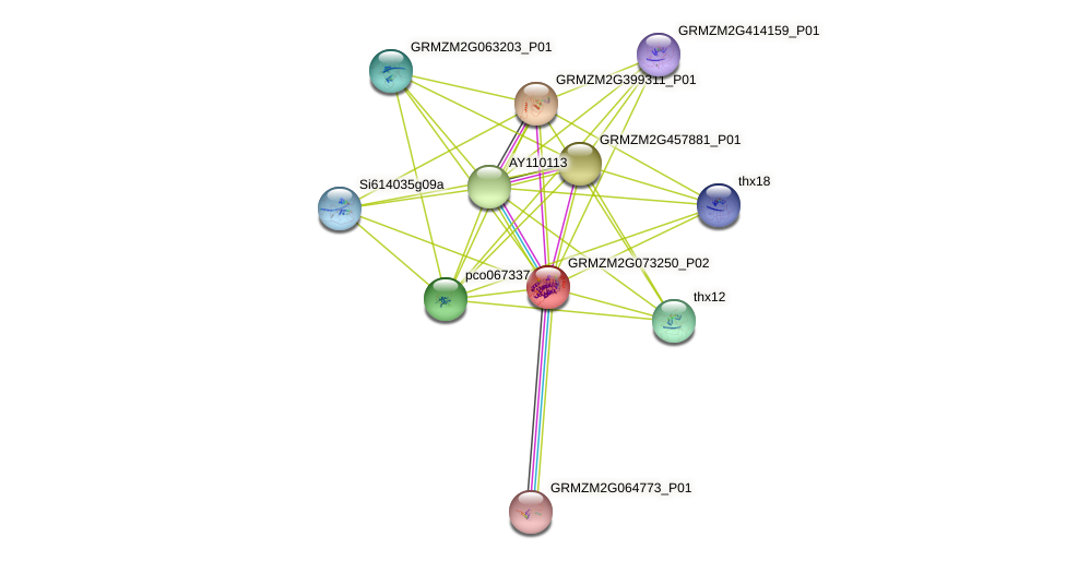 GRMZM2G073250_P02 protein (Zea mays) - STRING interaction network