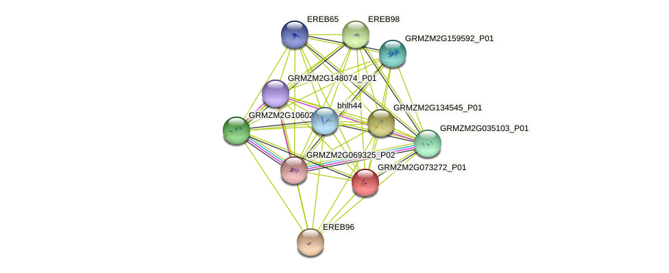 Zm.153296 protein (Zea mays) - STRING interaction network
