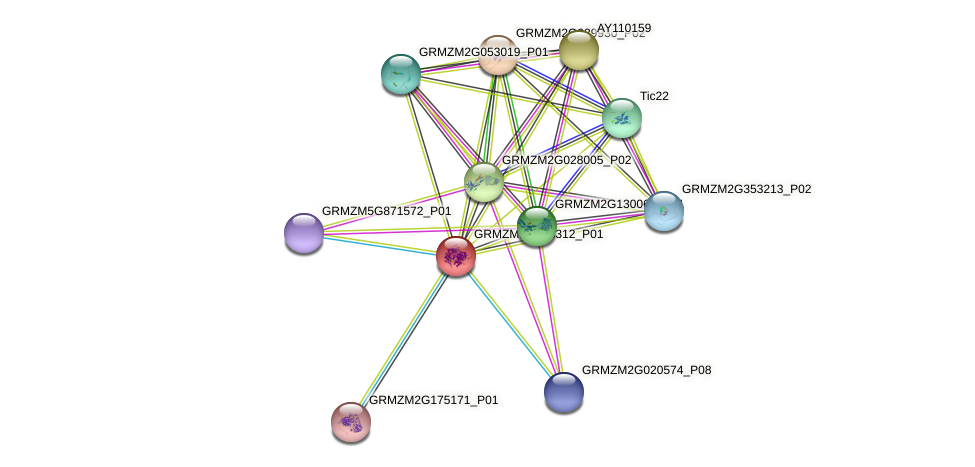 Zm.144813 protein (Zea mays) - STRING interaction network