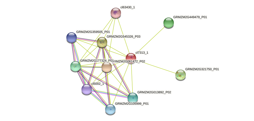 cl7313_1 protein (Zea mays) - STRING interaction network