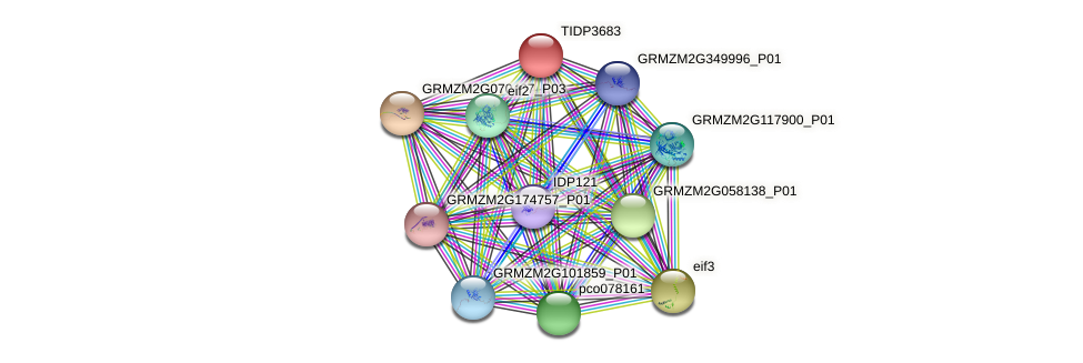 TIDP3683 protein (Zea mays) - STRING interaction network