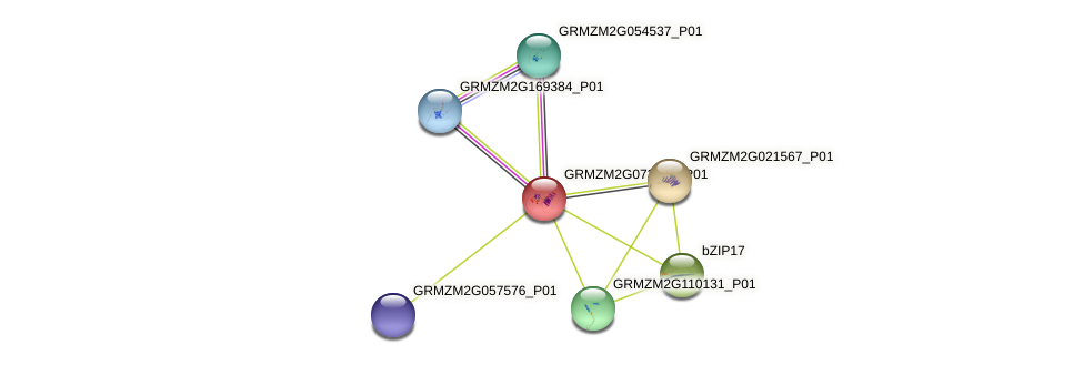 GRMZM2G073551_P01 protein (Zea mays) - STRING interaction network