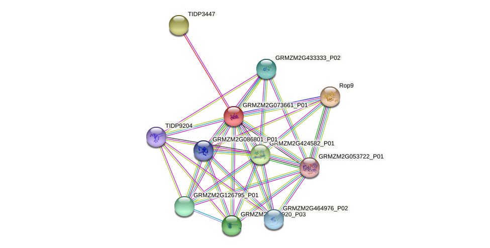GRMZM2G073661_P01 protein (Zea mays) - STRING interaction network