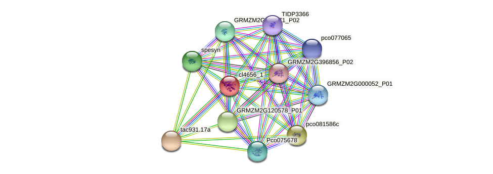 cl4656_1 protein (Zea mays) - STRING interaction network