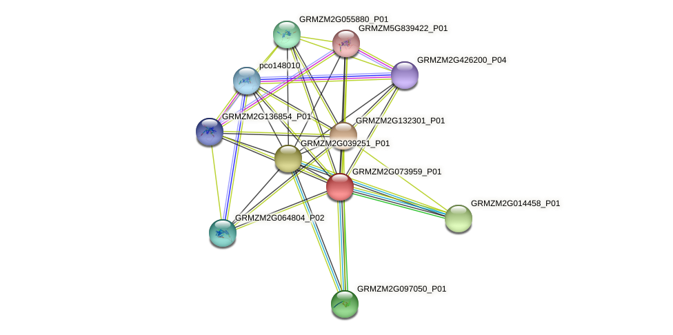 GRMZM2G073959_P01 protein (Zea mays) - STRING interaction network
