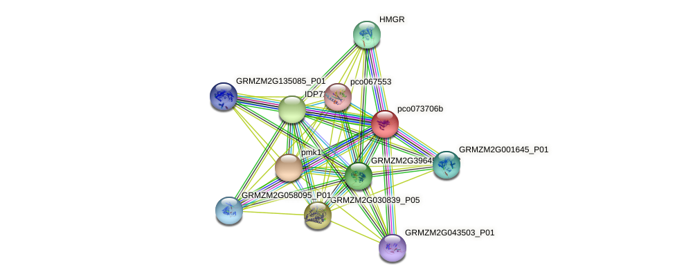 pco073706b protein (Zea mays) - STRING interaction network