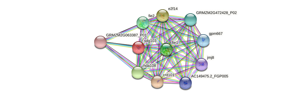 Zm.26381 protein (Zea mays) - STRING interaction network
