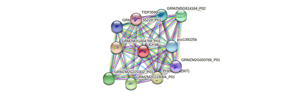 IDP88 protein (Zea mays) - STRING interaction network