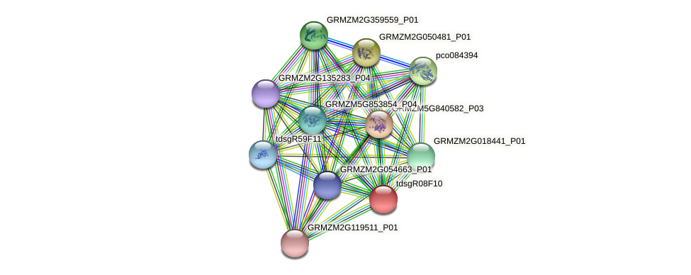 GRMZM2G074282_P02 protein (Zea mays) - STRING interaction network