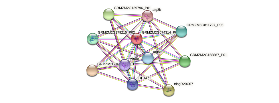 Zm.85191 protein (Zea mays) - STRING interaction network