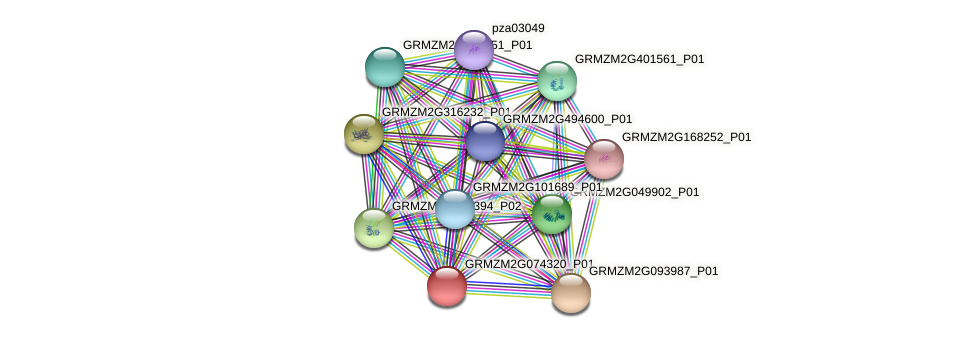 GRMZM2G074320_P01 protein (Zea mays) - STRING interaction network