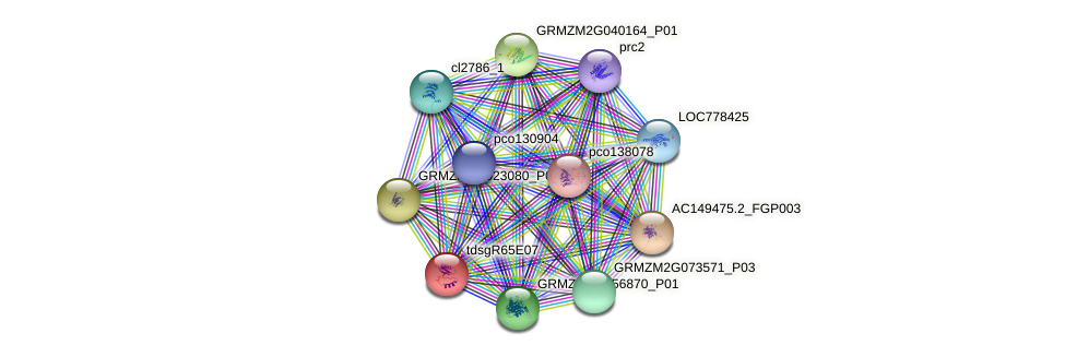 GRMZM2G074386_P05 protein (Zea mays) - STRING interaction network