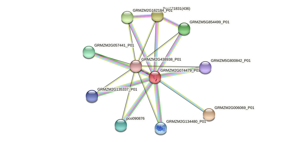 GRMZM2G074479_P01 protein (Zea mays) - STRING interaction network