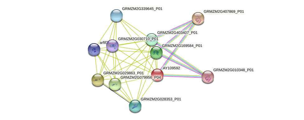GRMZM2G074496_P01 protein (Zea mays) - STRING interaction network