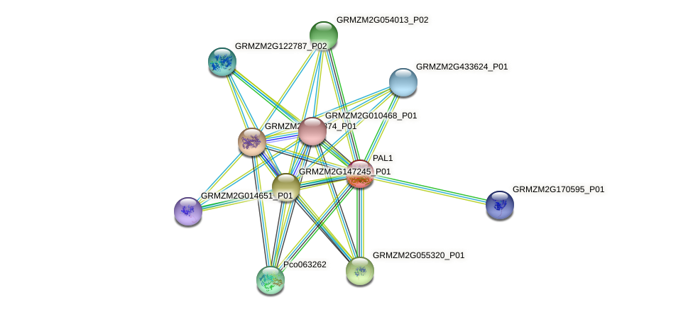 pal3 protein (Zea mays) - STRING interaction network
