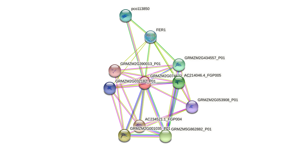 GRMZM2G074672_P02 protein (Zea mays) - STRING interaction network