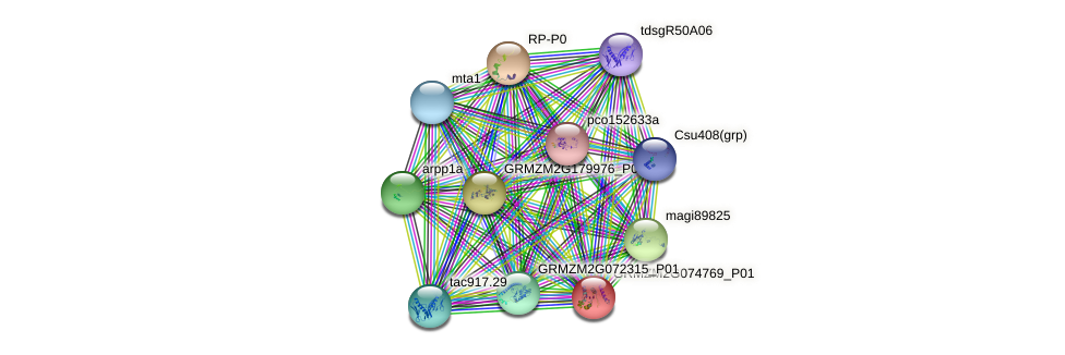 GRMZM2G074769_P01 protein (Zea mays) - STRING interaction network