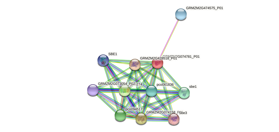 GRMZM2G074781_P01 protein (Zea mays) - STRING interaction network