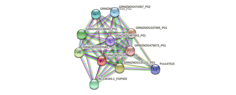 GRMZM2G074790_P03 protein (Zea mays) - STRING interaction network