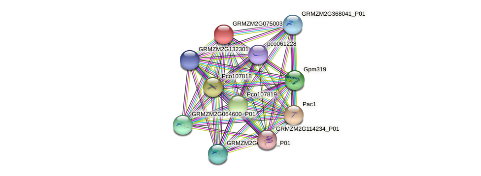 Zm.95458 protein (Zea mays) - STRING interaction network