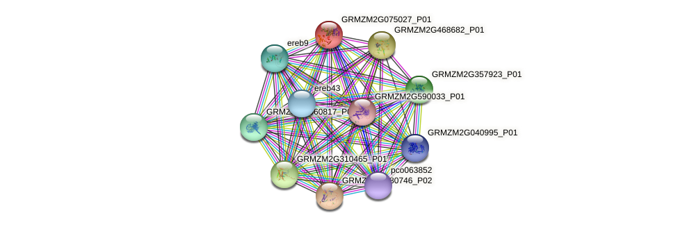 GRMZM2G075027_P01 protein (Zea mays) - STRING interaction network