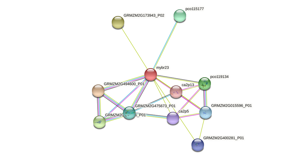 mybr23 protein (Zea mays) - STRING interaction network
