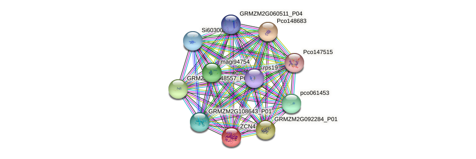 ZCN4 protein (Zea mays) - STRING interaction network