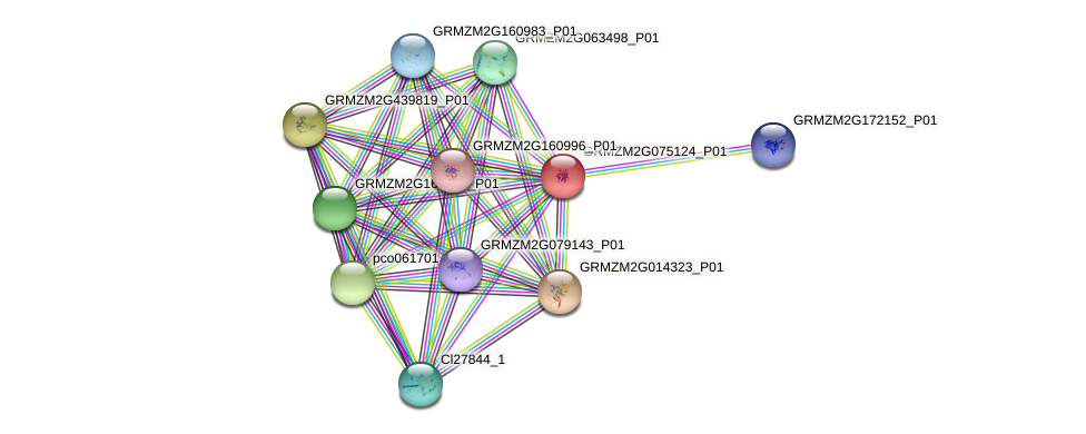 GRMZM2G075124_P01 protein (Zea mays) - STRING interaction network