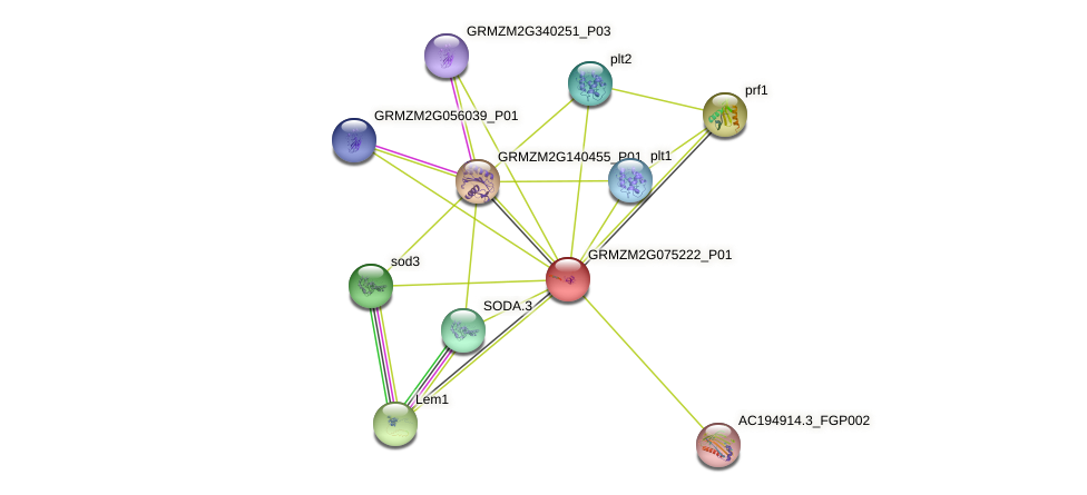GRMZM2G075222_P01 protein (Zea mays) - STRING interaction network