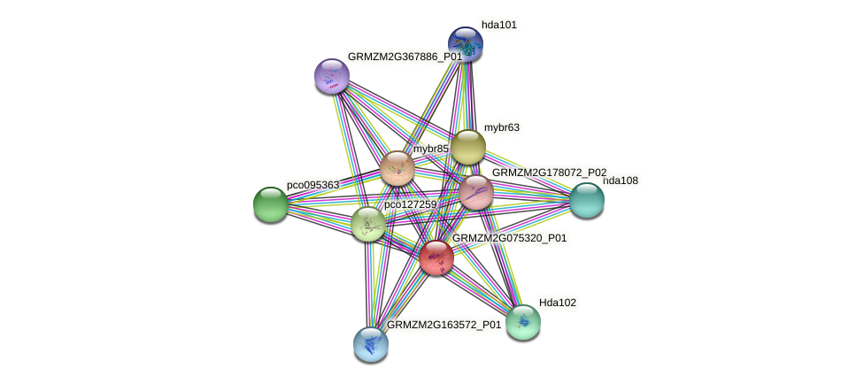 Zm.9958 protein (Zea mays) - STRING interaction network