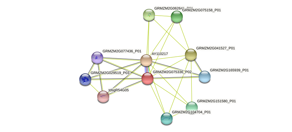 GRMZM2G075336_P02 protein (Zea mays) - STRING interaction network