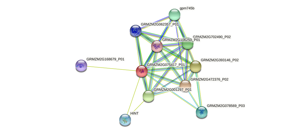 GRMZM2G075417_P01 protein (Zea mays) - STRING interaction network