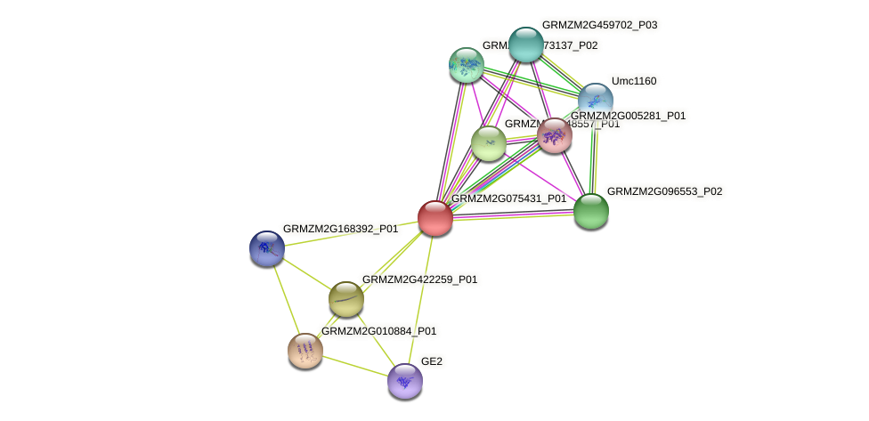Zm.24544 protein (Zea mays) - STRING interaction network