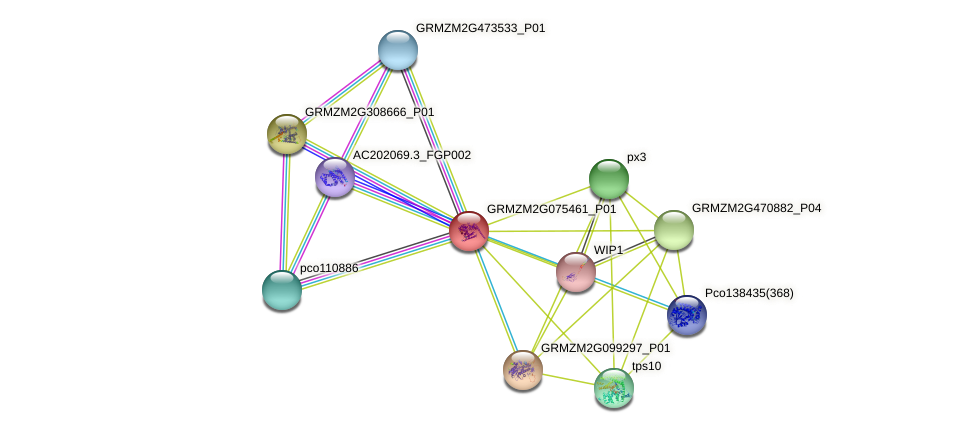 GRMZM2G075461_P01 protein (Zea mays) - STRING interaction network